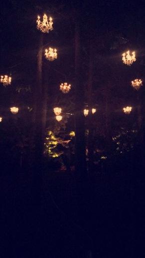 Illumination - Tree Lights at The Morton Arboretum